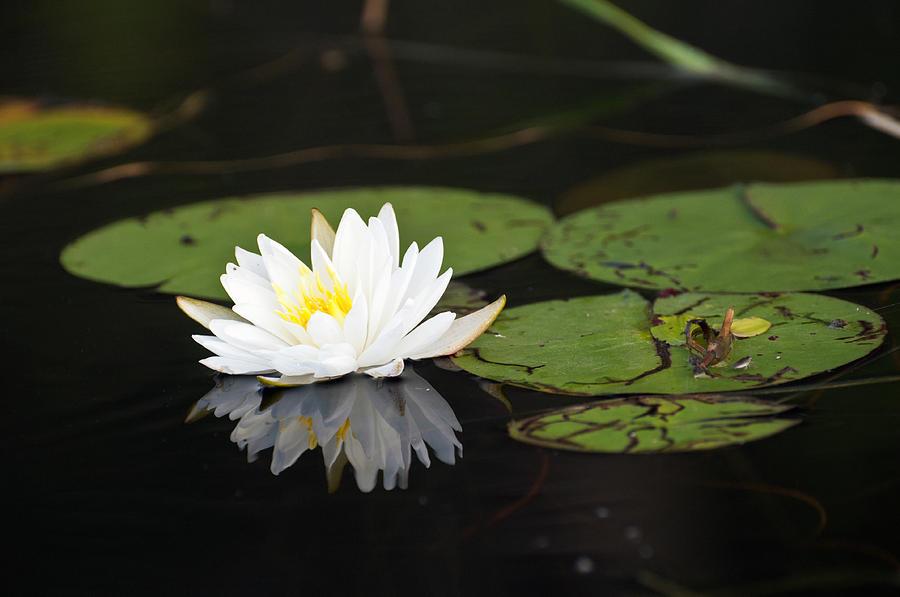 The White Lotus Journal Edge