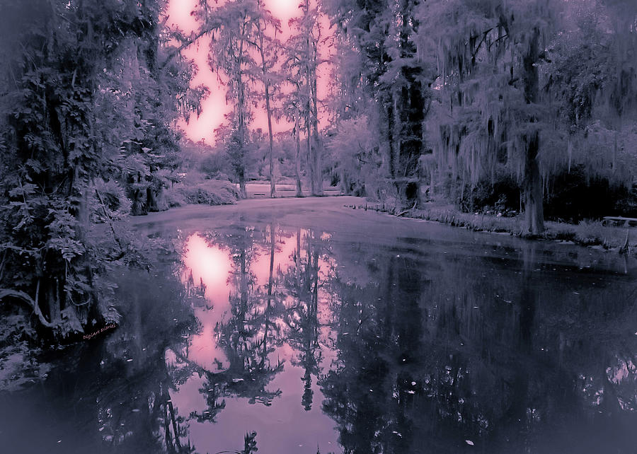 Winterland In The Swamp Photograph By DigiArt Diaries By