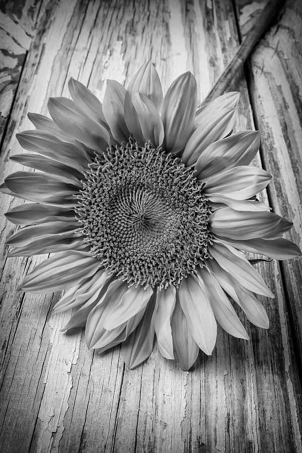 Sunflower Black And White Photograph By Garry Gay