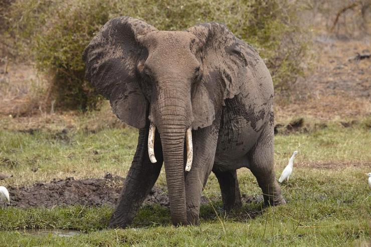 Angry Elephant Photograph by Richard Gray