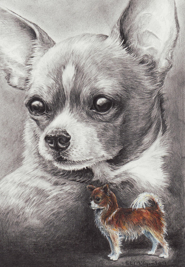 Chihuahua Drawing By Laurie McGinley
