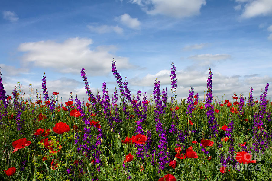 Image result for flowers of the field