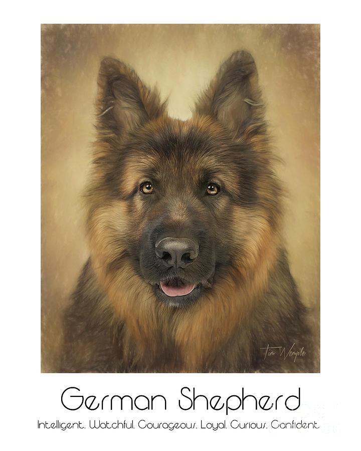 german shepherd poster by tim wemple