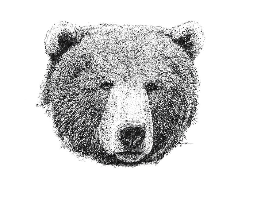 Grizzly Bear Drawing By George Bumann
