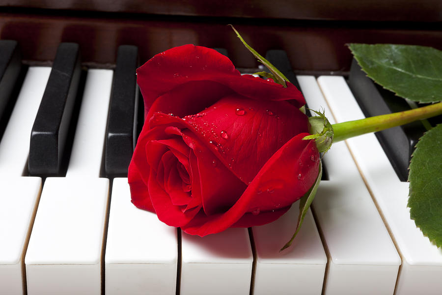 https://i2.wp.com/images.fineartamerica.com/images/artworkimages/mediumlarge/1/red-rose-on-piano-keys-garry-gay.jpg