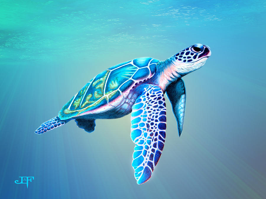 Sea Turtle Drawing By J Olson Laf