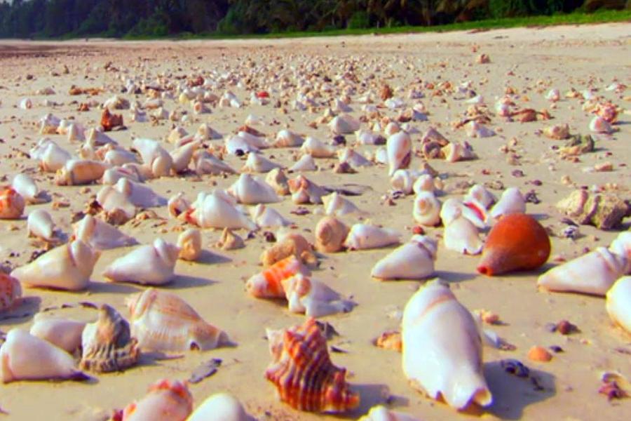 She Sells Sea Shells At The Sea Shore Seaweed And Sea
