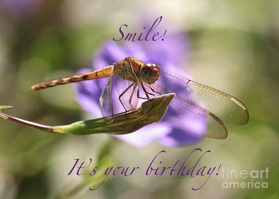 Smiling Dragonfly Birthday Card Photograph By Carol Groenen