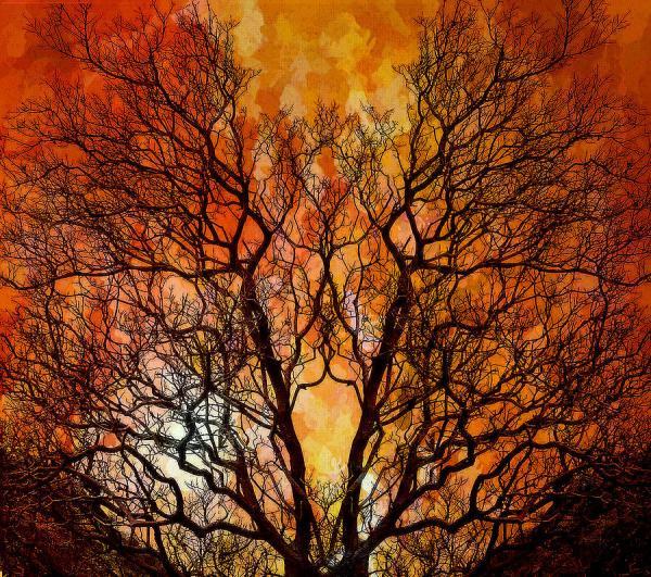 burning bush # 34
