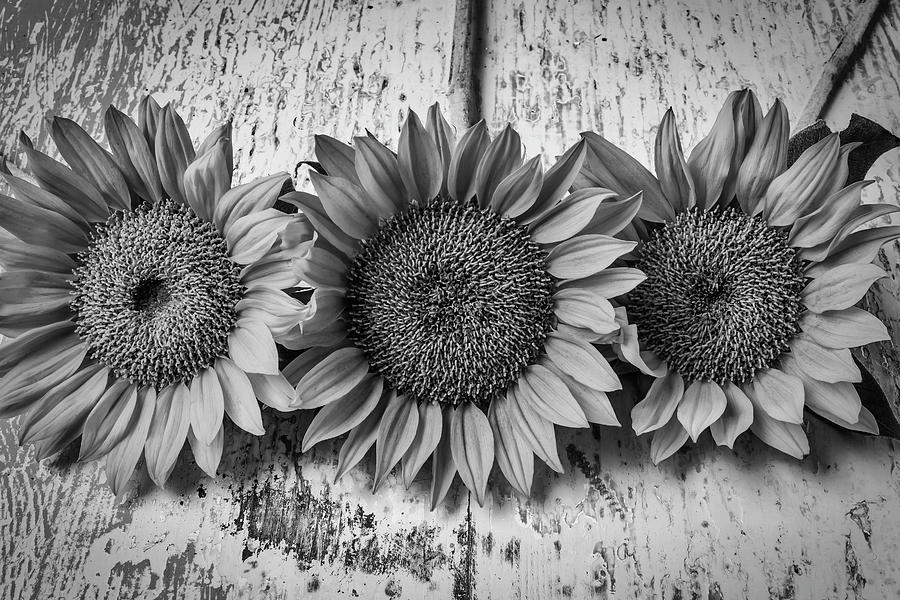 Three Sunflowers Still Life In Black And White Photograph By Garry Gay