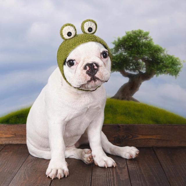 funny french bulldog puppy by maika 777