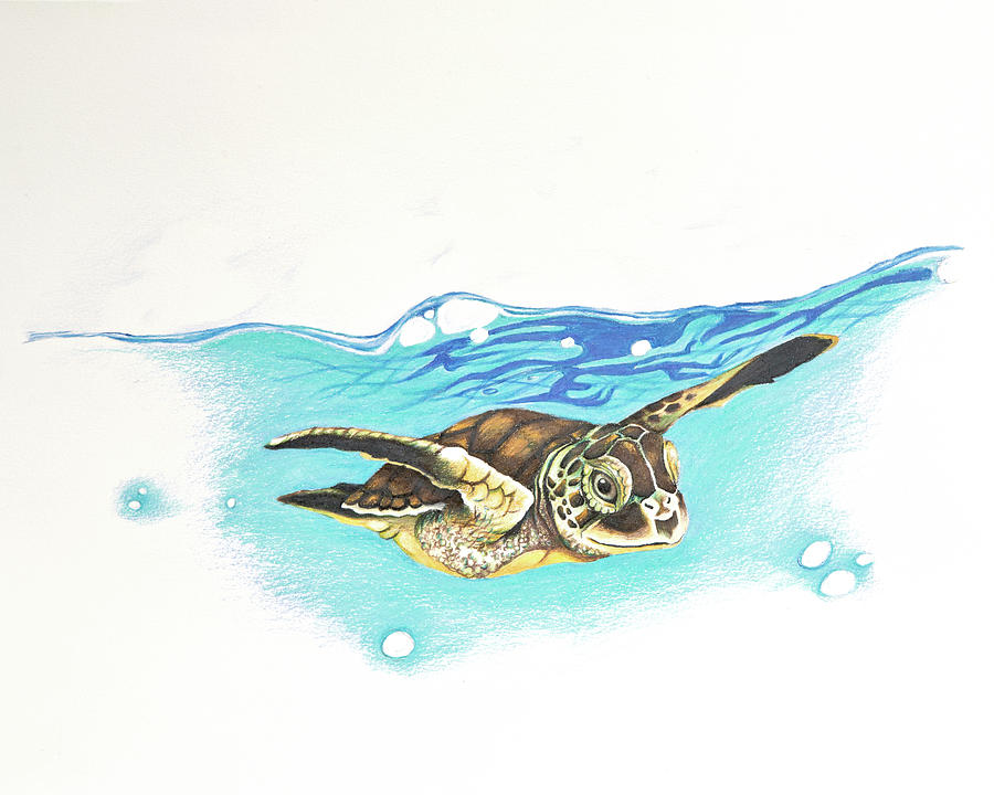 Sea Turtle Drawing By Corinne States