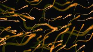 Improving sperm quality with diet changes: Studies recommend intake of walnuts, almonds, leafy vegetables and fresh fruits