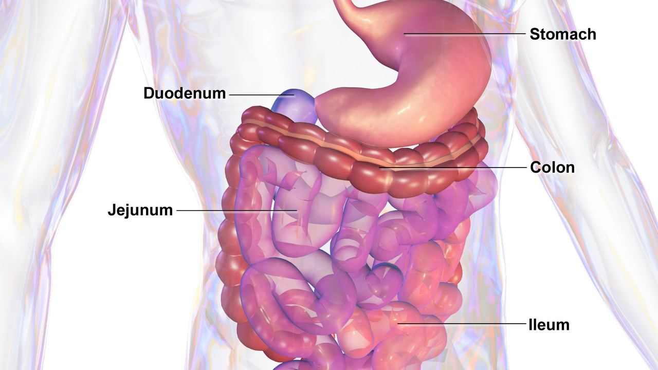 Nearly one in five COVID-19 patients may show only gastrointestinal symptoms; CT scans can aid early detection