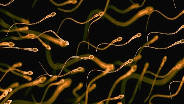 Scientists discover new way to isolate high-quality quality sperm to help improve IVF success rate