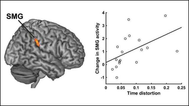 Time flies on some days, crawls on others: Study locates fatigued neurons that influence our perception of time