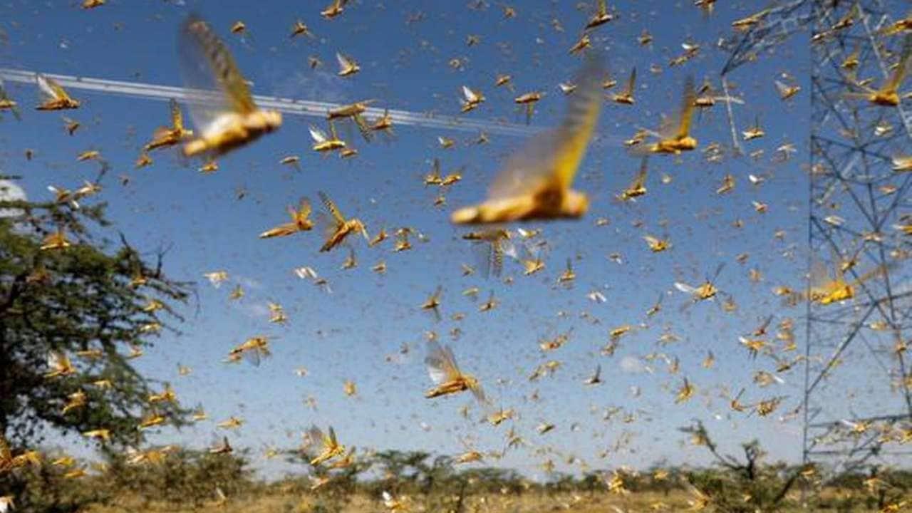 Billions of cicadas to emerge after spending 17 years burrowed underground- Technology News, Gadgetclock