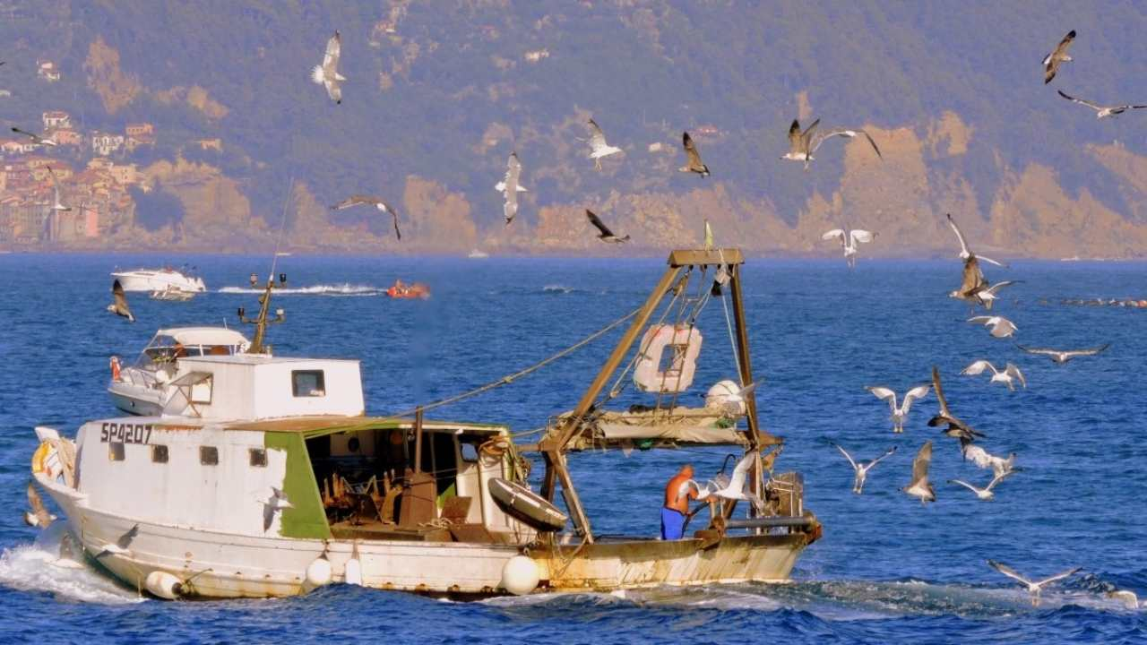 Fishing boats that dredge their nets release carbon equivalent to aviation- Technology News, Gadgetclock