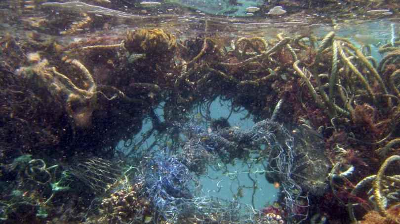 The Pacific Ocean has two garbage patches and is the most polluted ocean in the world. It has an est two trillion plastic pieces polluting its waters. Image credit: Ray Boland/NOAA