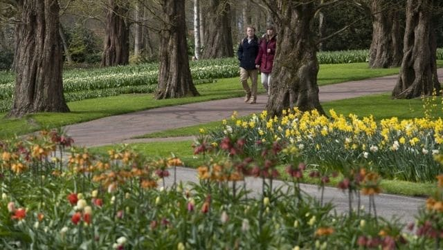 Dutch garden Keukenhof welcomes visitors for tulip season after end of prolonged coronavirus induced lockdown