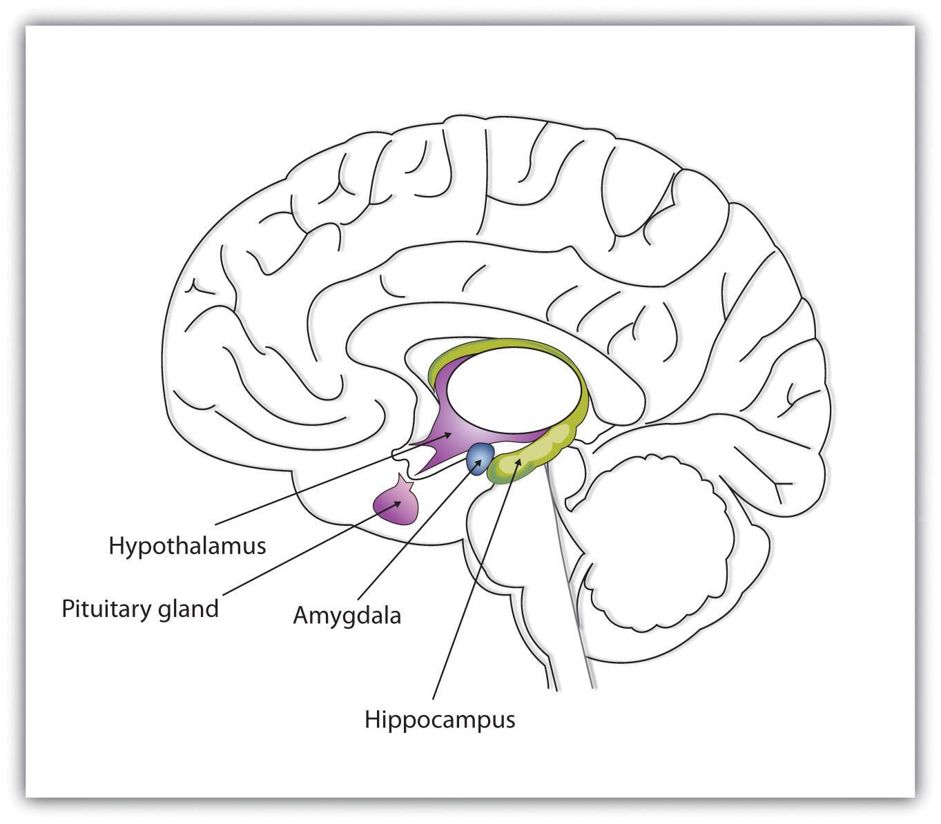 Introduction To Psychology V1 0