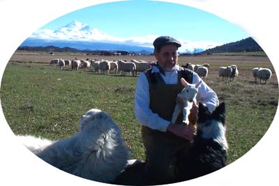 patrick with his sheep dogs, holding baby lamb
