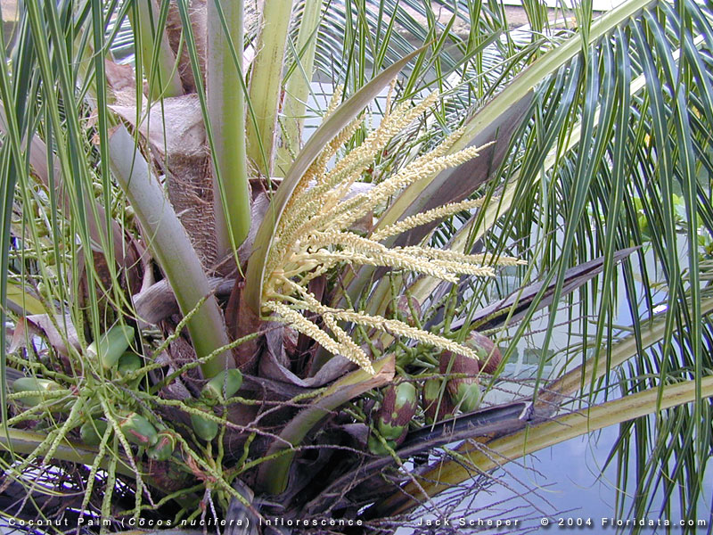 Types Tropical Leaves