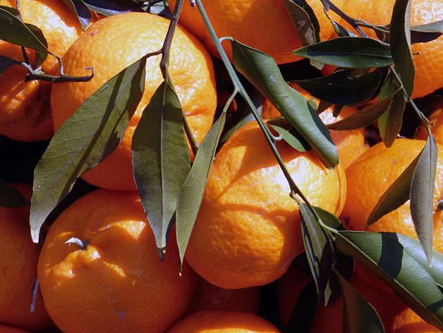 Tipi e varietà di mandarino domestico