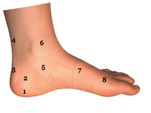 Foot and Ankle Conditions by Area | Side View | Sol Foot & Ankle Centers