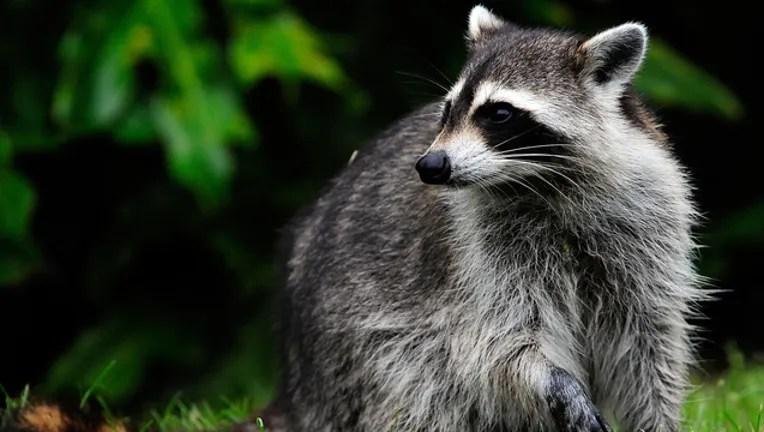 Rocket City Trash Pandas Unveiled As New Alabama Minor League Team