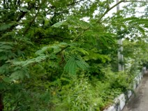 xiaomi-mi-a1-camera-12