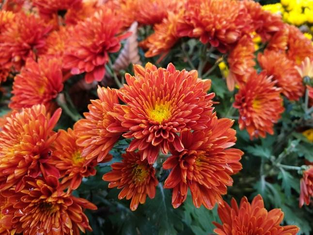 Photo de fleur 4