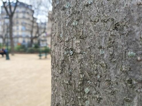 arbre tronc