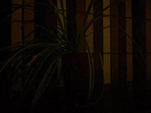 Google Photo Mode Nuit Pixel 3a (2)