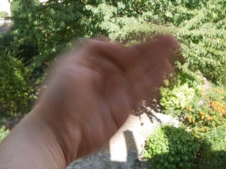 Avec une vitesse de 1/40s, la main en mouvement est floue