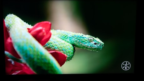 Boucle Costa Rica 4K - YouTube