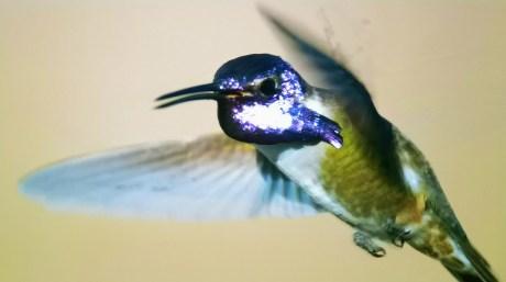 L'OLED sait aussi faire de très belles couleurs.