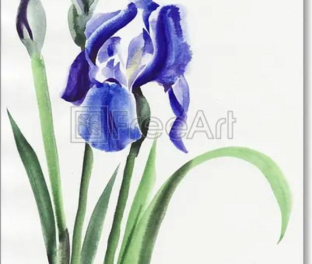 620ba9859527 Free Art Print Of Blue Iris Blue Iris Flowers Original Watercolor Painting  Freeart Fa12805843