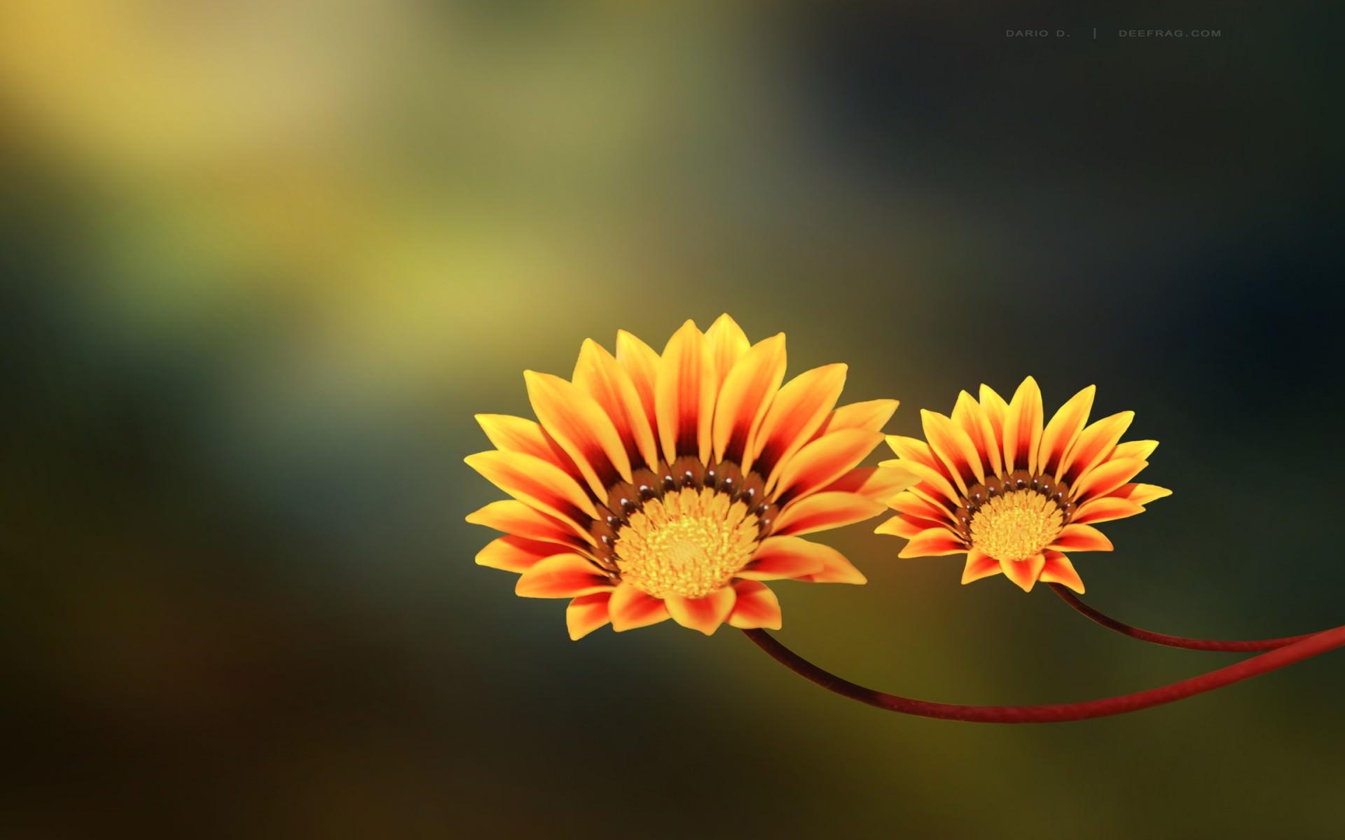 20  Cute Flower Backgrounds | Wallpapers | FreeCreatives