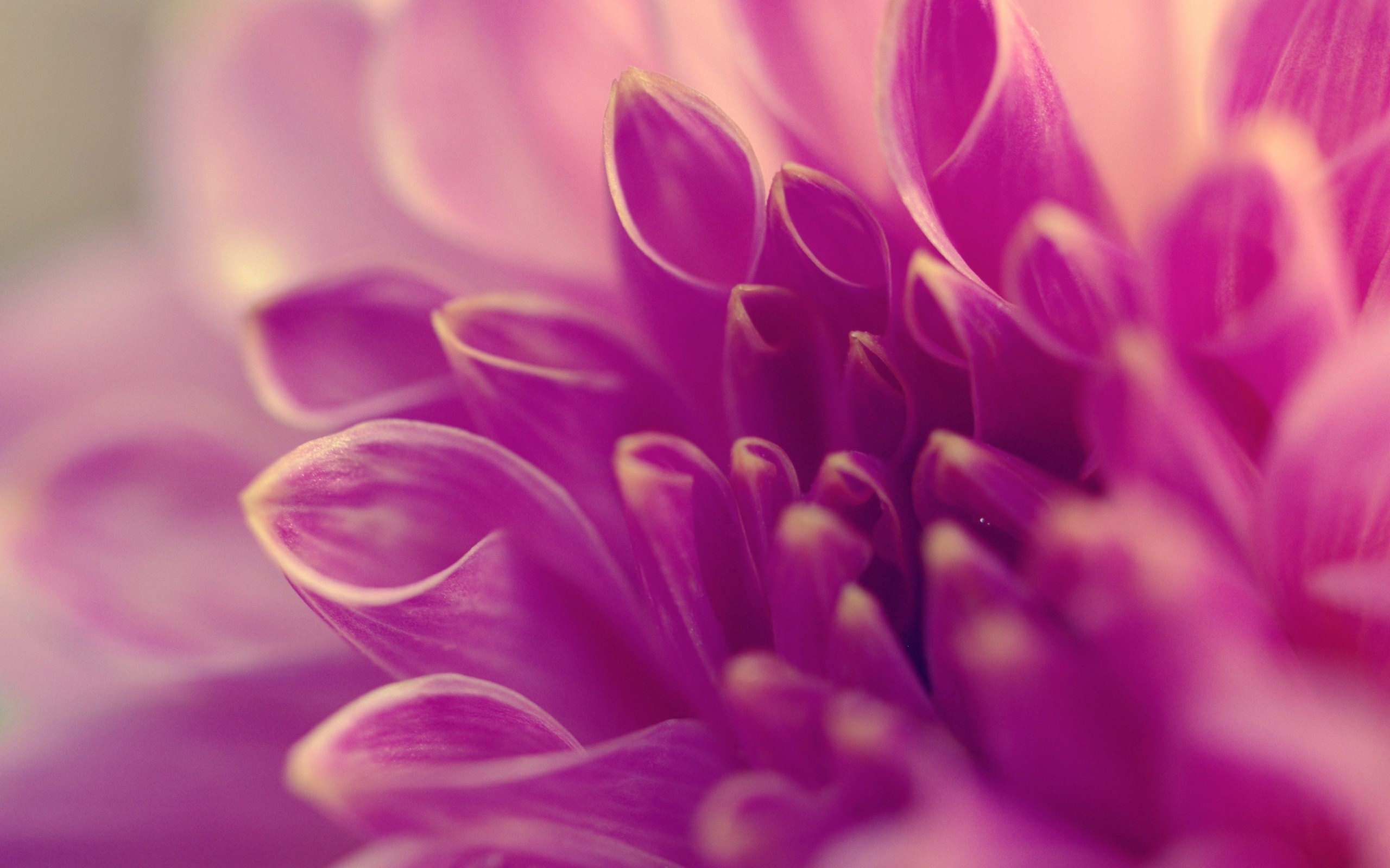 Single Purple Flower Screensaver