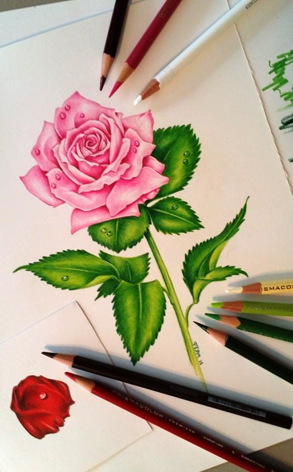 16  Flower Drawings   JPG Download Pretty Pink Rose Flower Drawing