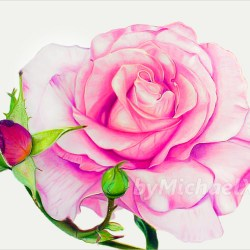 Coloured Flowers Drawings Gardening Flower And Vegetables