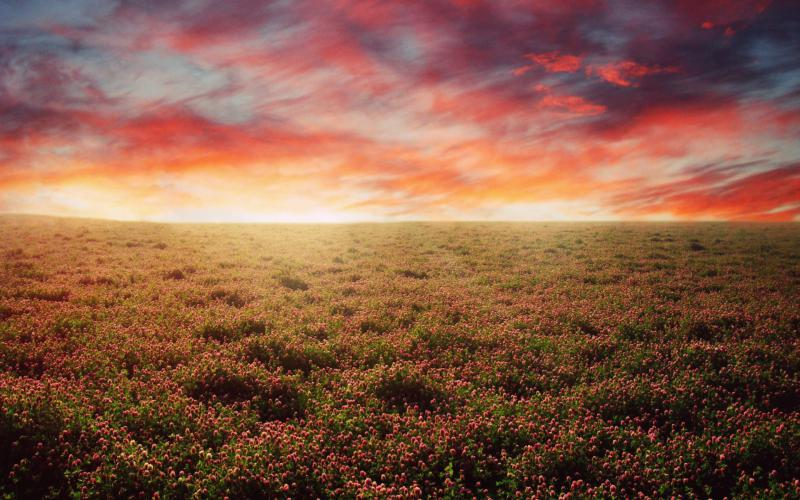 HD The Open Field Wallpaper Download Free 75747