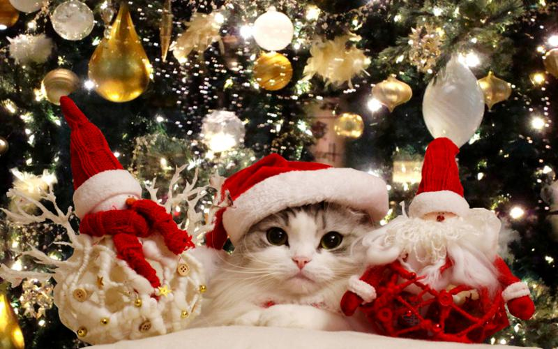 HD Christmas Cuteness Wallpaper Download Free 108513