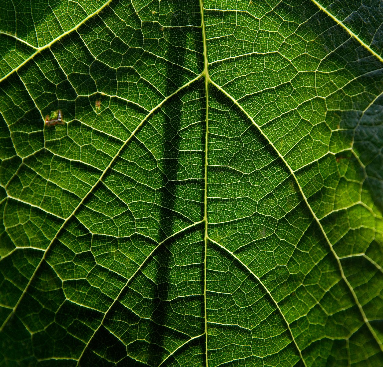 Free Leaf Structure Stock Photo