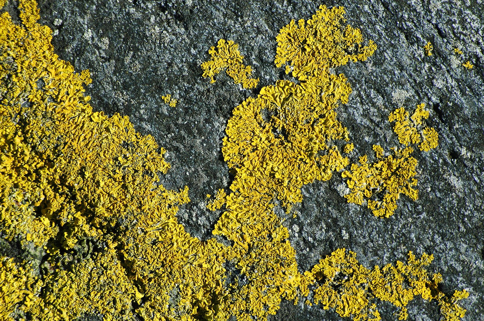 Free Yellow Moss Stock Photo