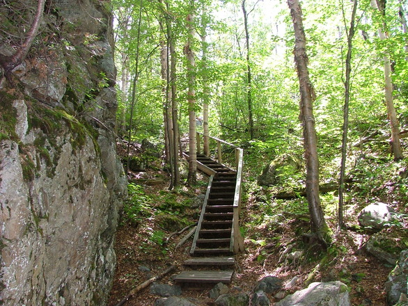 Image Result For Stairs In The Woods Search And Rescue