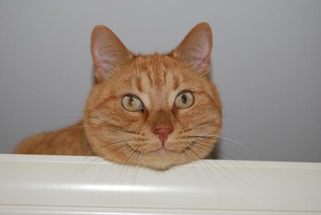 Free Smiling Cat Stock Photo