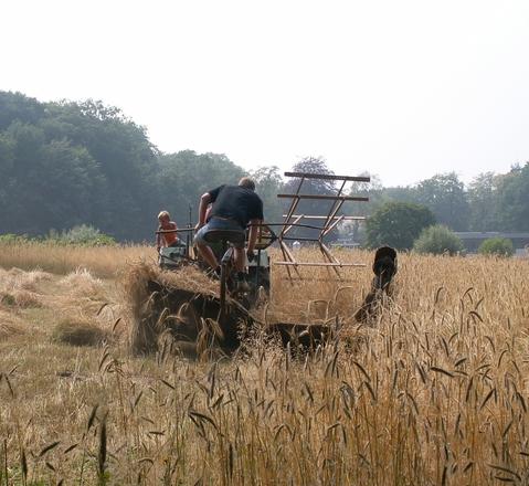 Harvest 3