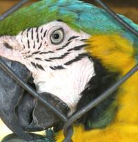 Parrot the Talking bird